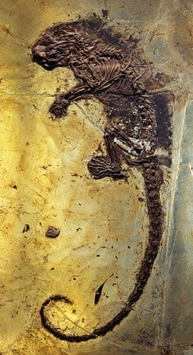 Grube Messel pit: Fossil of Prehistoric Rodent