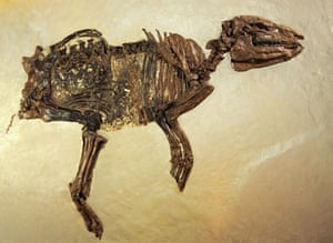 Grube Messel pit: Fossil of Ancient Horse