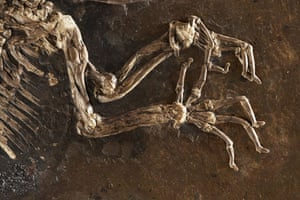 Ida missing link fossil: The front claws on Ida one of the most complete primate fossils ever found