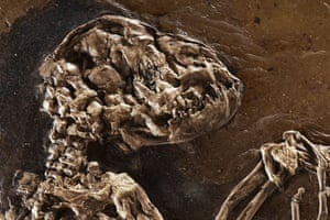 Ida missing link fossil: The skull of Ida one of the most complete primate fossils ever found