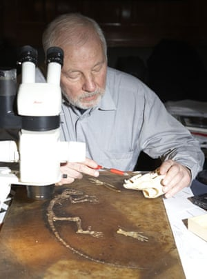 Ida missing link fossil: Dr Jens Lorenz Franzen studying Ida the fossil.