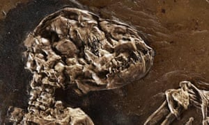 The skull of Ida the missing link primate fossil