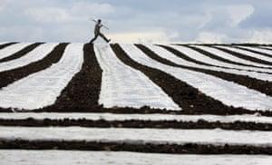 20 May 2009: Crumlin, Ireland: David Wallace checks on his crop of maize