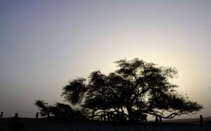 Week in Wildlife: 400-year old mesquite tree