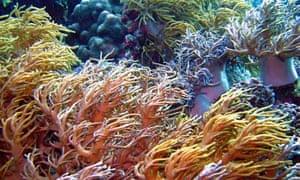 coral reefs in Wakatobi islands, Indonesia
