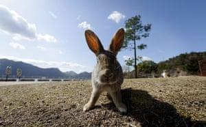 Week in wildlife: A rabbit stands still in Okunoshima Island, Japan