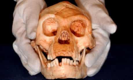 The skull of Homo floresiensis