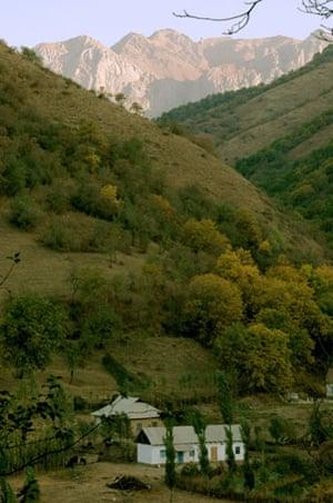 Trees Red List: Endangered trees in Kyrgystan