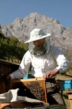 Trees Red List: Endangered trees in Kyrgystan: Bee keeping