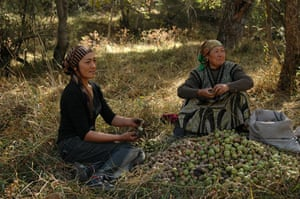 Trees Red List: Endangered trees in Kyrgystan: Walnut tree