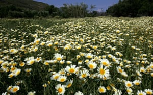 week in wildlife: Wild flowers at Kea island