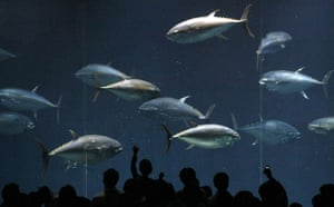 week in wildlife: Pacific bluefin tuna swim in a fish tank at Tokyo Sea Life Park in Tokyo