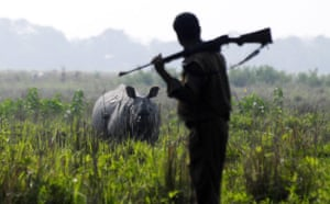 week in wildlife: Horned rhinoceros population census at the Pobitora Wild Life Sanctuary