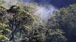 Home: Yann Arthus Bertrand and Luc Besson: Primary Forest Fjordland, New Zealand