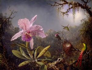 Endless Forms: Charles Darwin, natural science and the visual arts Martin Johnson Heade