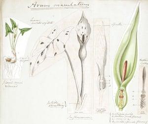 Endless Forms: Charles Darwin, natural science and the visual arts John Stevens Henslow