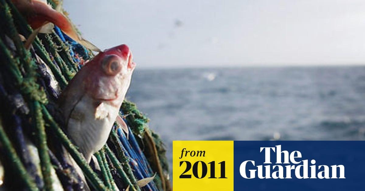 Sustainable fish customers 'duped' by Marine Stewardship