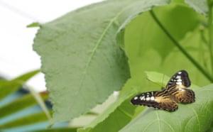 Butterflies: Butterfly
