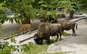 Trouble in Paradise: Steinbrener/Dempf  Sculptures At The Animal Enclosures at Vienna Zoo