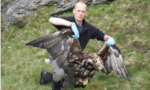 Golden eagle poisoned
