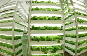 24 hours in pictures: Plant Factories Propose A New Style Of Agriculture Japan