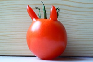 Wonky fruit and veg: A tomato with horns