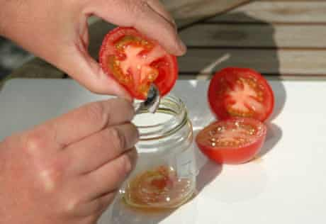 Scoop out the tomato seeds