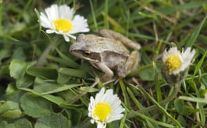 Big Nature Count: Tiny frog in a Hampshire garden