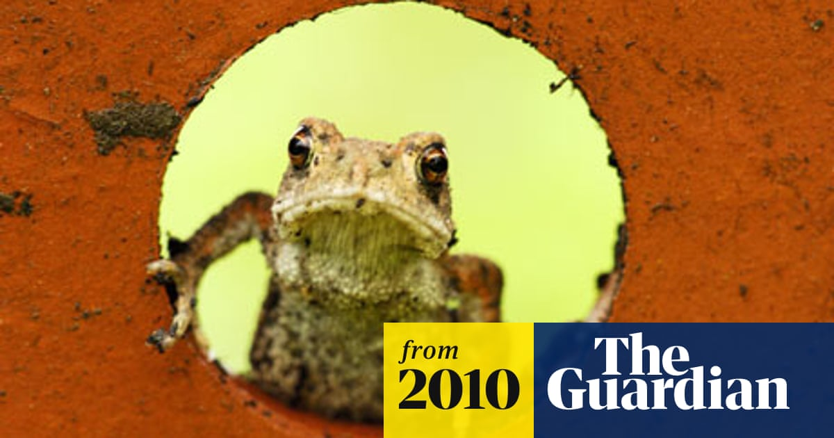 Toads able to detect earthquake days beforehand, says study