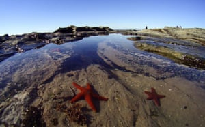 Week in wildlife: Features from Jeffreys Bay