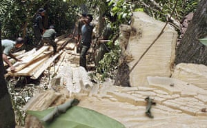 Week in Wildlife: Forest rangers confiscate woods after a raid , in Aceh province