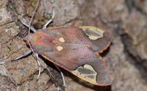 Week in Wildlife: Sonar jamming moth