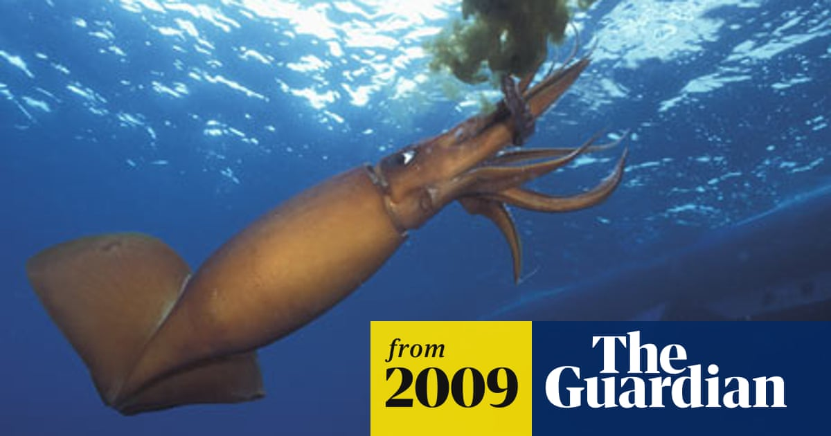 Just when you thought it was safe … giant squid terrorise ...