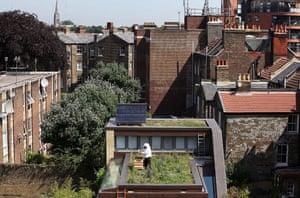 Week in Wildlife: Urban Beekeeping On East London Rooftops, beekeeper installs new bee hive