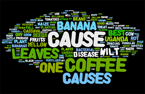 Word cloud of topics asked by Ugandans