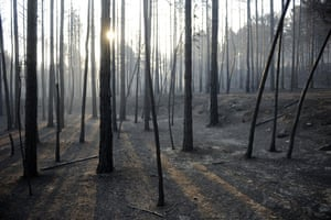 Satellite eye on Earth: Burned trees are pictured in Aliaga, near Teruel, Spain