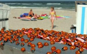 Satellite eye on Earth: Ladybugs at Baltic Sea beach Warnemuende