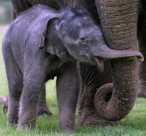 Satellite eye on Earth: Baby Asian Elephant