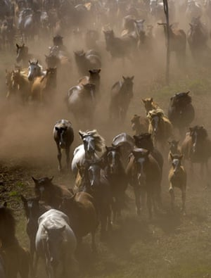 Sabucedo horses: Wild horses gallop through the hills of Sabucedo