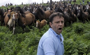 Sabucedo horses: A villager shouts as he tries to round up wild horses