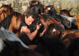 Sabucedo horses: An 'Aloitado' Fighter grabs a wild horse at the Rapa Das Bestas festival