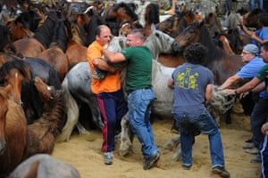 Sabucedo horses: 'Aloitadores' Fighters hold a wild horse at the Rapa Das Bestas festival