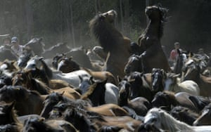 Sabucedo horses: Two wild horses fight in the hills of Sabucedo
