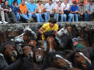 Sabucedo horses: A horseman tries to tame a wild horse during the Rapa Das Bestas festival