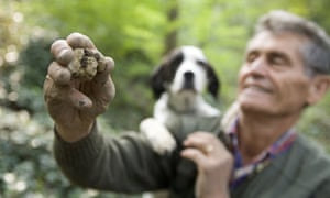White truffle hunting in Italy