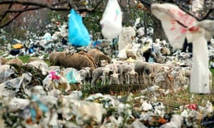 why we should ban plastic bags