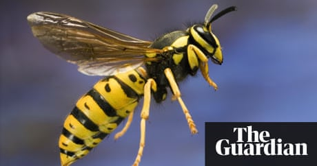 Notes Queries Why Do Wasps Sting People Life And Style The