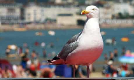 A seagull on the beach in Weymouth