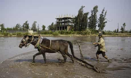 A farmer ploughs his rice paddy in the Delta
