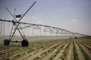 Nile Delta: An irrigation machine on a potato plantation outside Alexandria